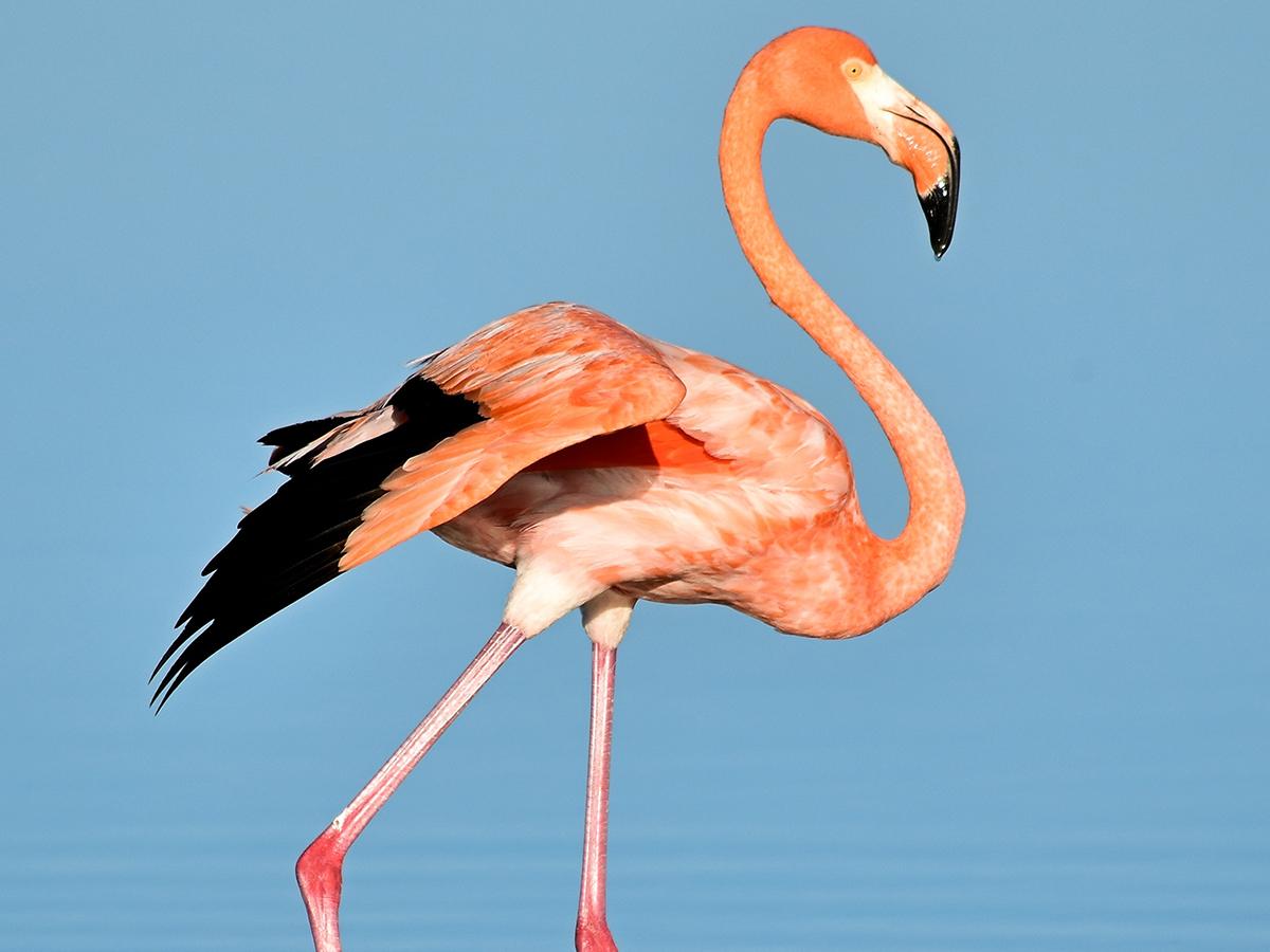 Flamingo seen during wildlife tour.