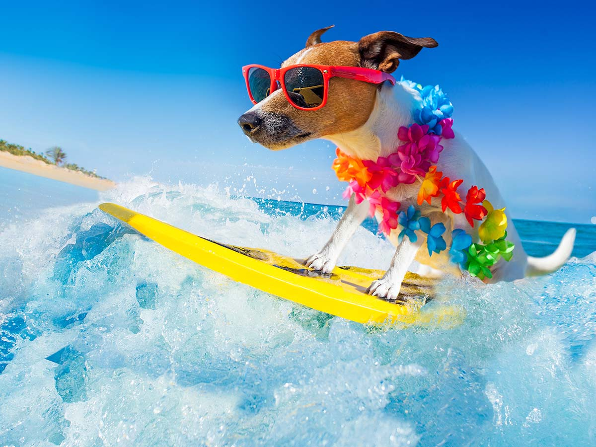 Dog in sunglasses on a surfboard riding a wave.